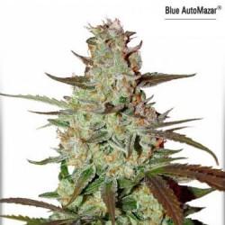 Blue AutoMazar - Auto Féminisée