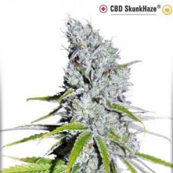 CBD SkunkHaze - Féminisée