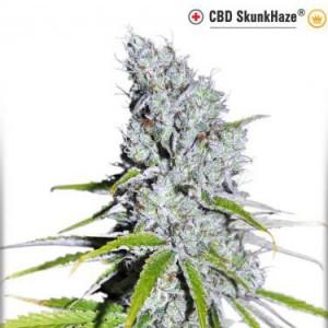 CBD SkunkHaze - Feminized