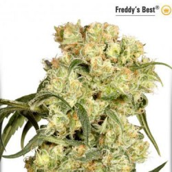 Freddy's Best - Feminized