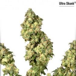 Ultra Skunk