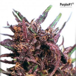 Purple No.1 - Regular