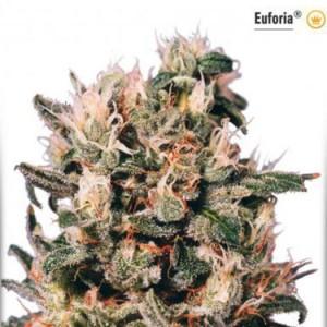 Euforia - Regular